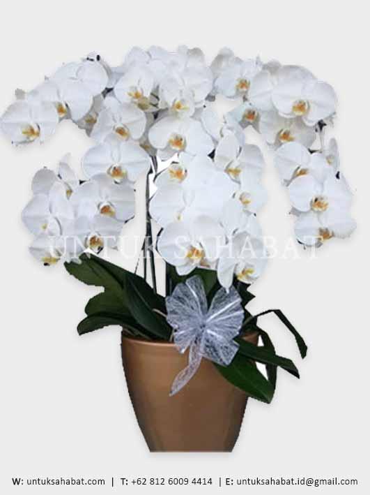 Bunga Meja Anggrek Bandung 04