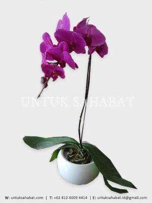 Bunga Anggrek Semarang 01