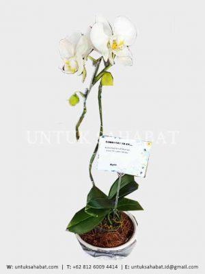 Bunga Meja Anggrek 01