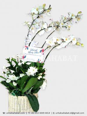 Bunga Meja Anggrek 02