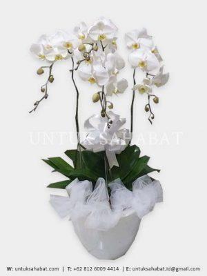 Bunga Meja Anggrek Jakarta 01